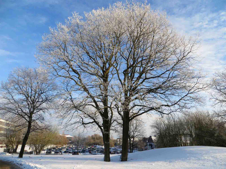 Winterwonderland – kein Schnee in Sicht